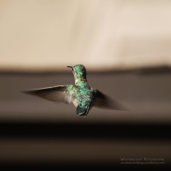Smaragd Rücken