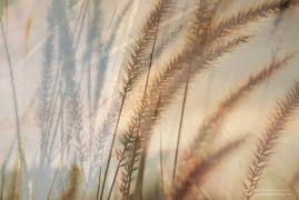Gräser2
