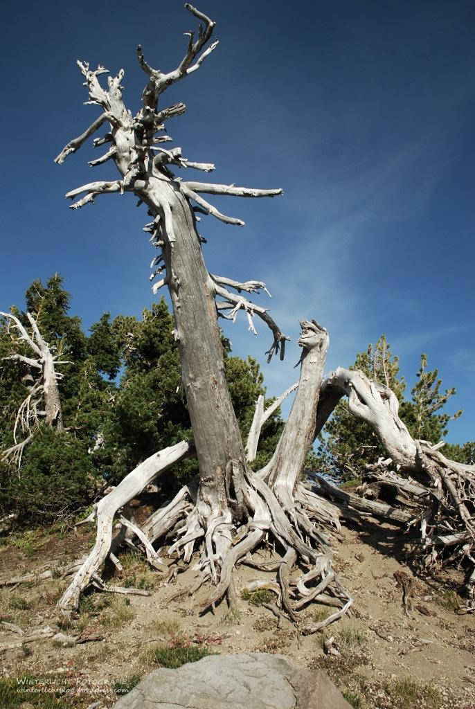 beim Crater Lake
