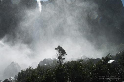 Im Yosemite National Park, 2009