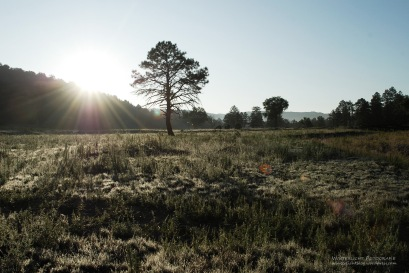 New Mexico, 2009