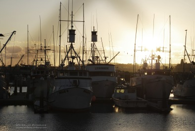 San Diego, 2008
