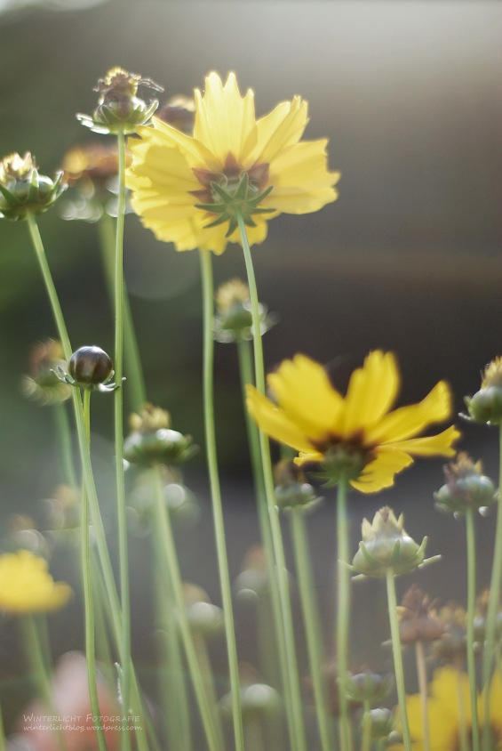 Garten, 2012
