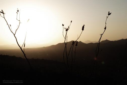 Nähe Tucson, Airzona, 2008